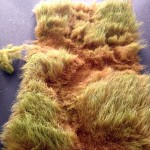 teddy-bear-fur-tutorial-david-and-kalissa-skibicki-ai