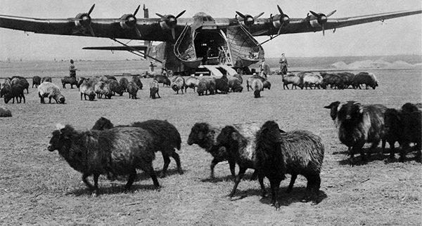 gigant herd