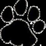 Profile picture of leopard